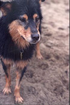 Athena, 2003-2015