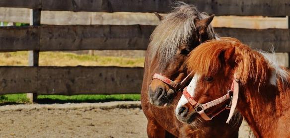 horses-1348284_960_720
